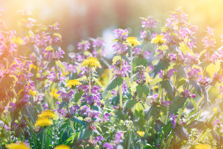 bathed: Spring meadow with flowers bathed in sunlight