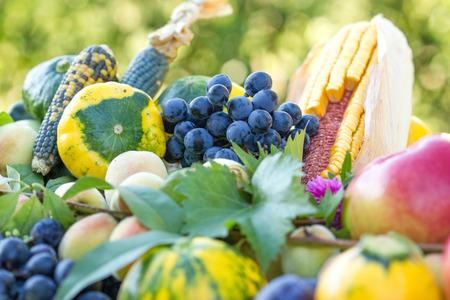 yellow corn: Healthy diet (food) - organic seasonal healthy food