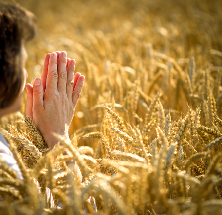 yields: Appreciation for the rich harvest - prayer for a rich harvest