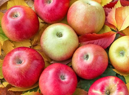 seasonal: Fresh organic apples - seasonal fruit