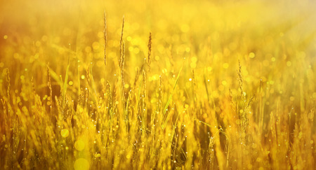 morning dew: Early morning, the morning sun shining on the grass covered with dew Stock Photo