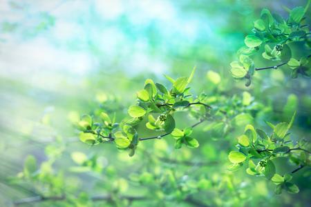 新鮮な春の葉 - 若い春の太陽光線に照らされた森林の葉