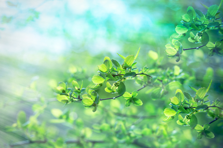 Frische Frühlingsblätter - junge Frühling Blätter im Wald durch Sonnenstrahlen beleuchtet Lizenzfreie Bilder