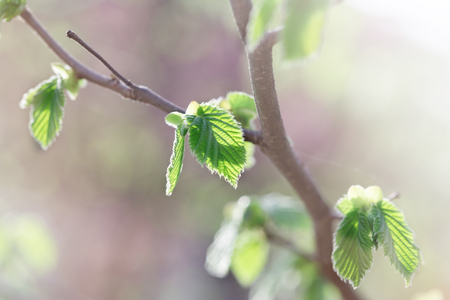 Young spring leaves - beautiful nature in springtime Stock Photo
