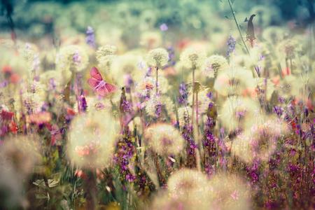 Beautiful meadow - flowering, blooming flowers (beautiful landscape, beautiful nature)