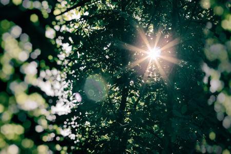 The suns rays lit through tree tops Stock Photo