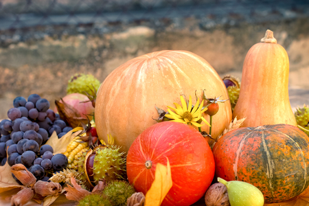 Autumn harvest - seasonal organic fruit and vegetable Banque d'images