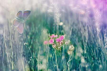 Beautiful nature in spring, fauna and flora (buttercup flower and butterfly)