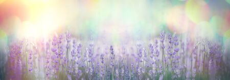 Selective and soft focus on lavender flower, beautiful flower in flower garden