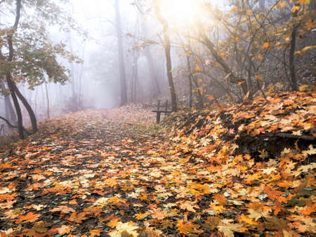 Fog in forest, photo -picture take with mobile phone in late afternoon, beautiful autumn nature in forest Stok Fotoğraf