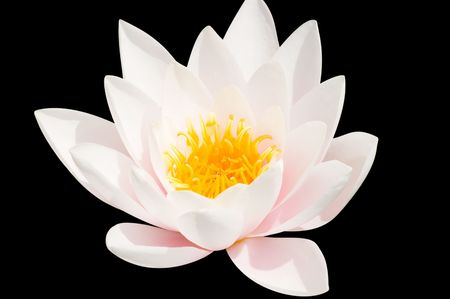 water lily Stock Photo - 2449979