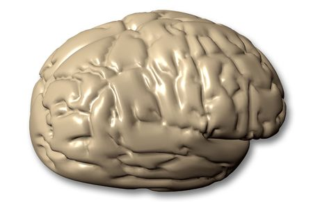 didactic: 3D Human brain