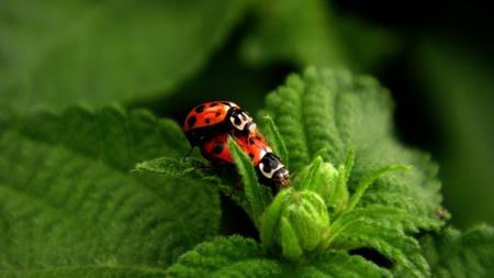 conman: ladybird meting
