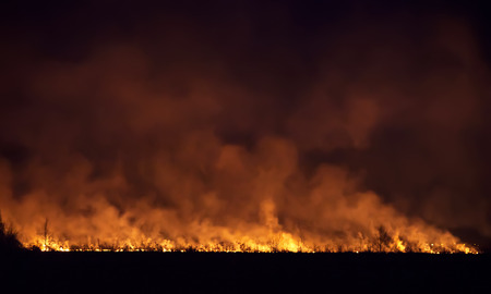 dark forest: Night fire in a field.