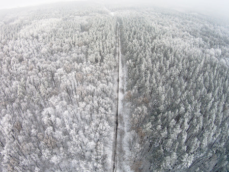 Aerial view of winter forest with hoarfrost on the trees Stock Photo
