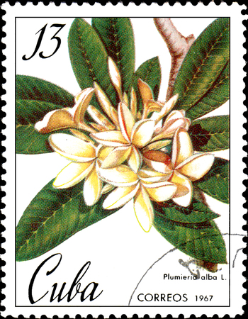 CUBA - CIRCA 1967: Stamp printed in CUBA shows image of a Plumieria alba, circa 1967 Editorial