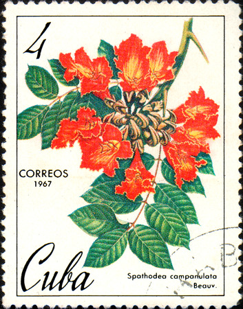 CUBA - CIRCA 1967: Stamp printed in Cuba, shows image Spathodea campanulata, circa 1967 Editorial