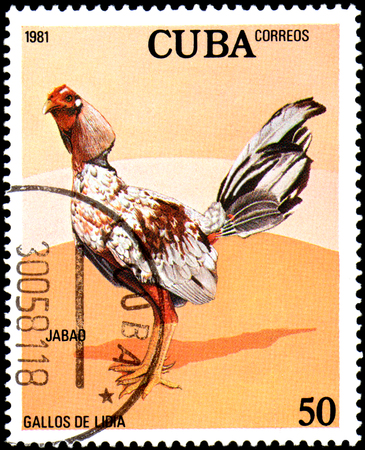 CUBA - CIRCA 1981: A stamp printed by Cuba shows the Cock Jabao, from the series Fighting Cocks Editorial