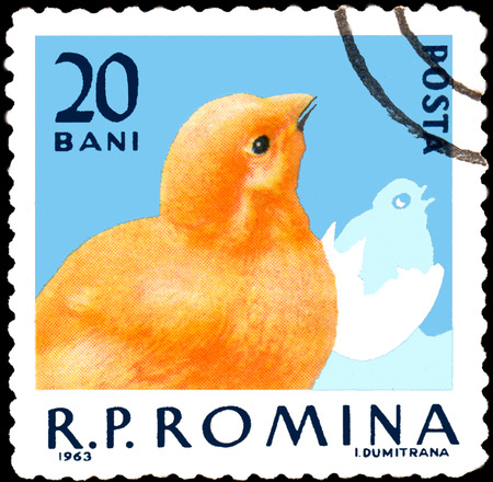 ROMANIA - CIRCA 1963: Postage stamp printed in Romania, shows chick, a series of poultry Editorial