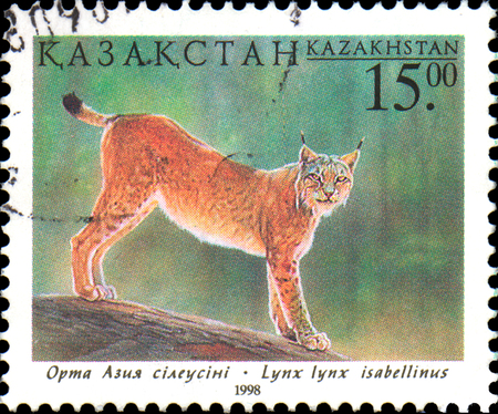 postal stamp: KAZAKHSTAN - CIRCA 1998: Postal stamp printed in Kazakhstan shows Lynx. Fauna of Kazakhstan - family cat