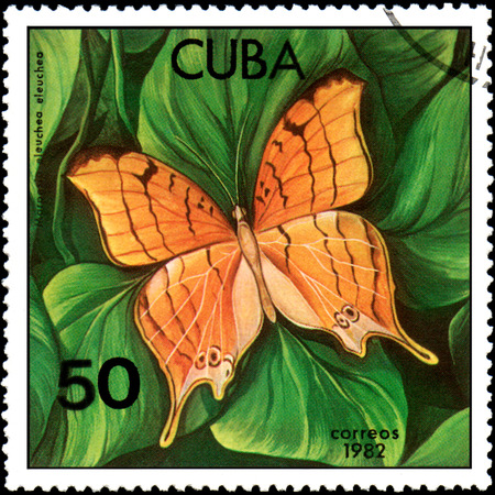 CUBA - CIRCA 1982: Postage stamp printed by Cuba shows butterfly Marpesia eleuchea