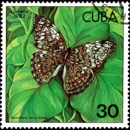 CUBA - CIRCA 1982: Postage stamp printed by Cuba shows butterfly Hamadryas ferox diasia