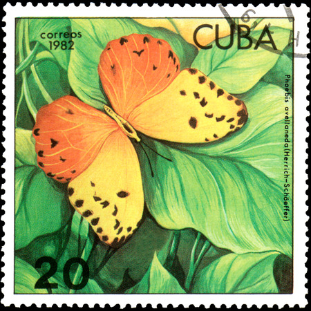 CUBA - CIRCA 1982: Postage stamp printed by Cuba shows butterfly Phoebis avellaneda