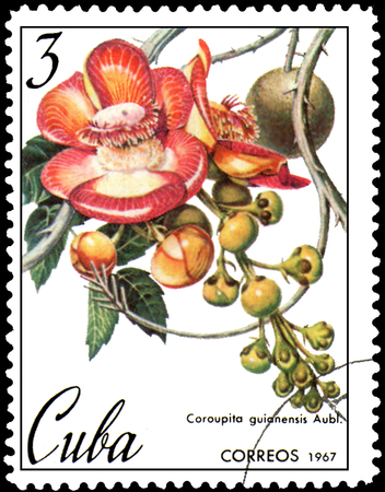 CUBA - CIRCA 1967: postage stamp, printed in Cuba, shows image of Couroupita guianensis (cannonball tree)