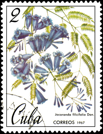 CUBA - CIRCA 1967: postage stamp, printed in Cuba, shows image of Jacaranda filicifolia Editorial