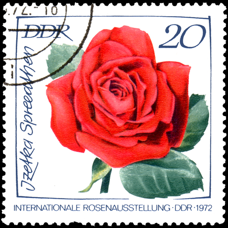 GDR - CIRCA 1972: postage stamp printed in GDR shows image of rose Izetka Spree-Athens, International exhibition of roses in Erfurt