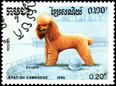 CAMBODIA - CIRCA 1990: postage stamp, printed in Cambodia, shows a Poodle dog Editorial