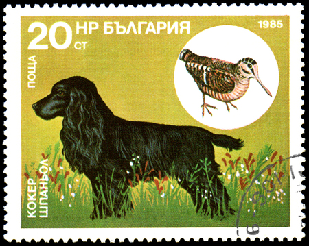 BULGARIA - CIRCA 1985: postage stamp, printed in Bulgaria, shows a Cocker Spaniel and Woodcock