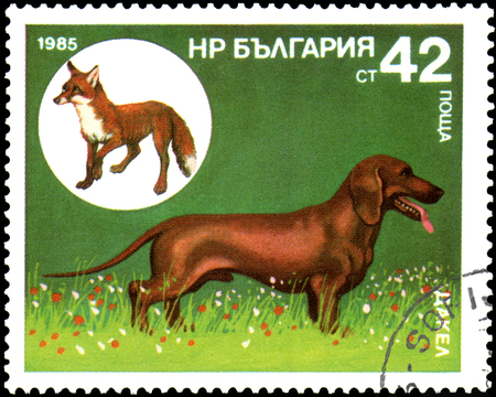 BULGARIA - CIRCA 1985: a postage stamp, printed in Bulgaria, shows a Dachshund and Red Fox Editorial