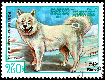 KAMPUCHEA - CIRCA 1987: postage stamp, printed in Kampuchea, shows a Samoyed Dog, series breeds dogs Editorial