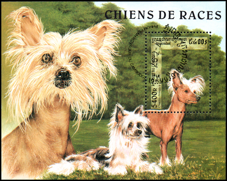 CAMBODIA - CIRCA 1997: postage souvenir sheet, printed in Cambodia, shows a Tufted Chinese, series breeds dogs Editorial
