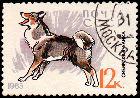 USSR - CIRCA 1965: a postage stamp, printed in USSR, shows a East Siberian Laika, series Hunting and Service Dogs Editorial