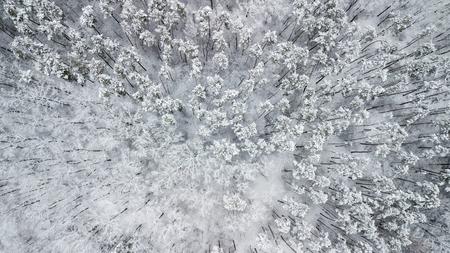 Uitzicht op de met sneeuw bedekte dennen in het bos, bovenaanzicht