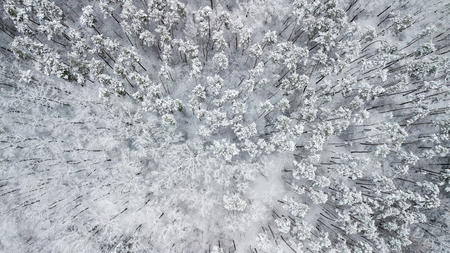 View of the snow-covered pines in the forest, top view Banco de Imagens