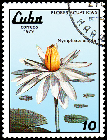 CUBA - CIRCA 1979: A postage stamp, printed in Cuba, shows a Nymphaea ampla, series water lilies