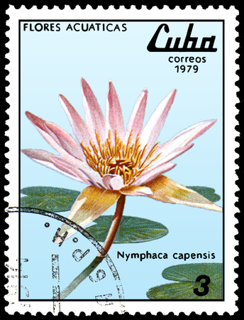 CUBA - CIRCA 1979: A postage stamp, printed in Cuba, shows a Nymphaea capensis, series water lilies Editorial
