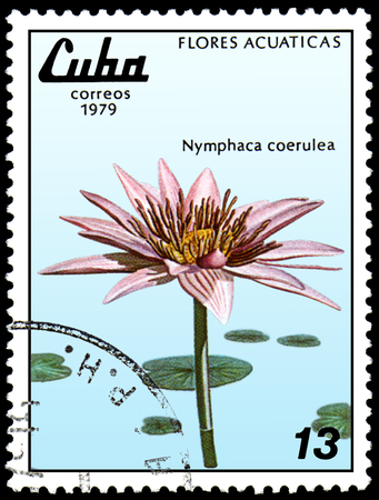 CUBA - CIRCA 1979: A postage stamp, printed in Cuba, shows a Nymphaea caerulea, series water lilies