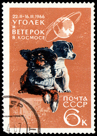 "USSR - CIRCA 1966: stamp, printed in the USSR, shows two dogs with the inscription ""Ugolek and Weterok in space, 1966"", series Space Achievments"