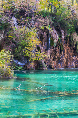 Old sunken trees in a crystal clear lake. Plitvice lakes.