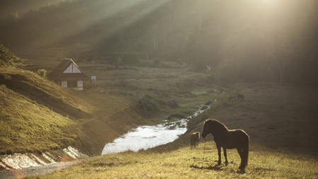 grassy knoll: The horse is standing on the grassy knoll with sun shines Stock Photo