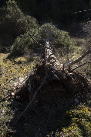 Of route by the mountain in a sunny but cold day of winter. surrounded by living nature and still life.In this picture you can see a pine fallen by the last storms. Stock Photo