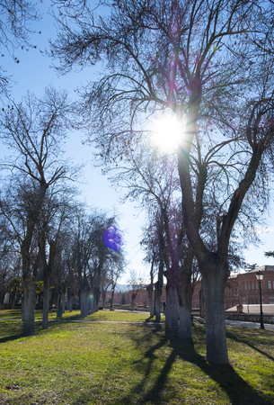 photo of a park full of trees without leaves on a beautiful and sunny winter day. The sun´s rays filter through the bare branches. Stock Photo