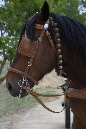 detail of the head of a brown chocolate horse with black mane with covered eyes and bells Stock Photo