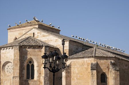 A large group of storks decide to stop to rest from their long journey, to regain strength,they perch on the ground, on the roof of the church, on television antennas....