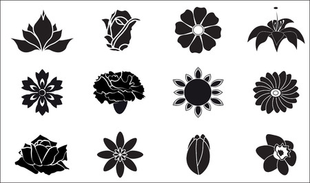 camomile flower: set of design flower icons - rose, lily, camomile, daisy, tulip, cornflower, Transvaal daisy, carnation, narcissus, sunflower