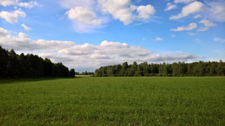 the summer cleaned field, in the middle of the wood and the sky with clouds, a landscape Reklamní fotografie